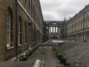 The 'ground level' 'roof': photo taken from the walkway that joins the West and New Wings of Somerset House, with rhubarb pots visible.